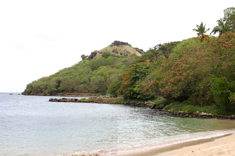Katie KALANCHOE, St Lucia, Pigeon Island