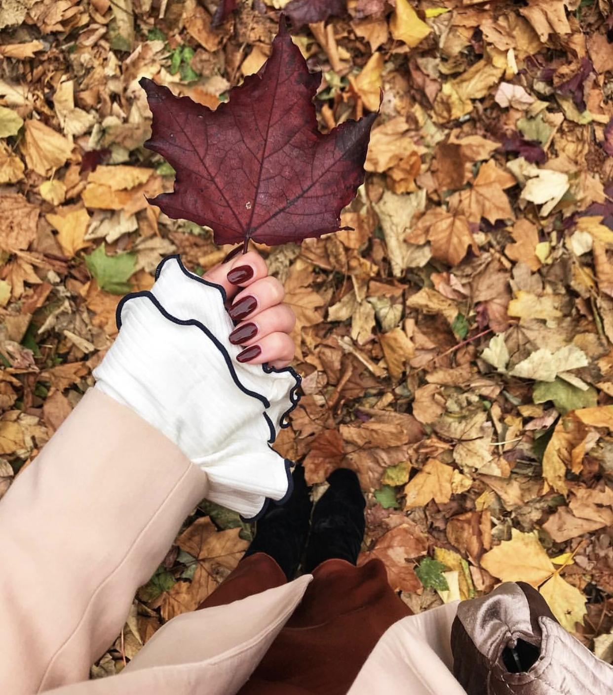 Katie Heath, KALANCHOE, Burgundy for autumn,