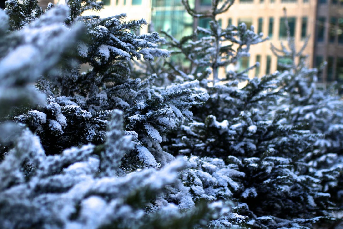 The Winter Forest, Broadgate, London, Katie KALANCHOE