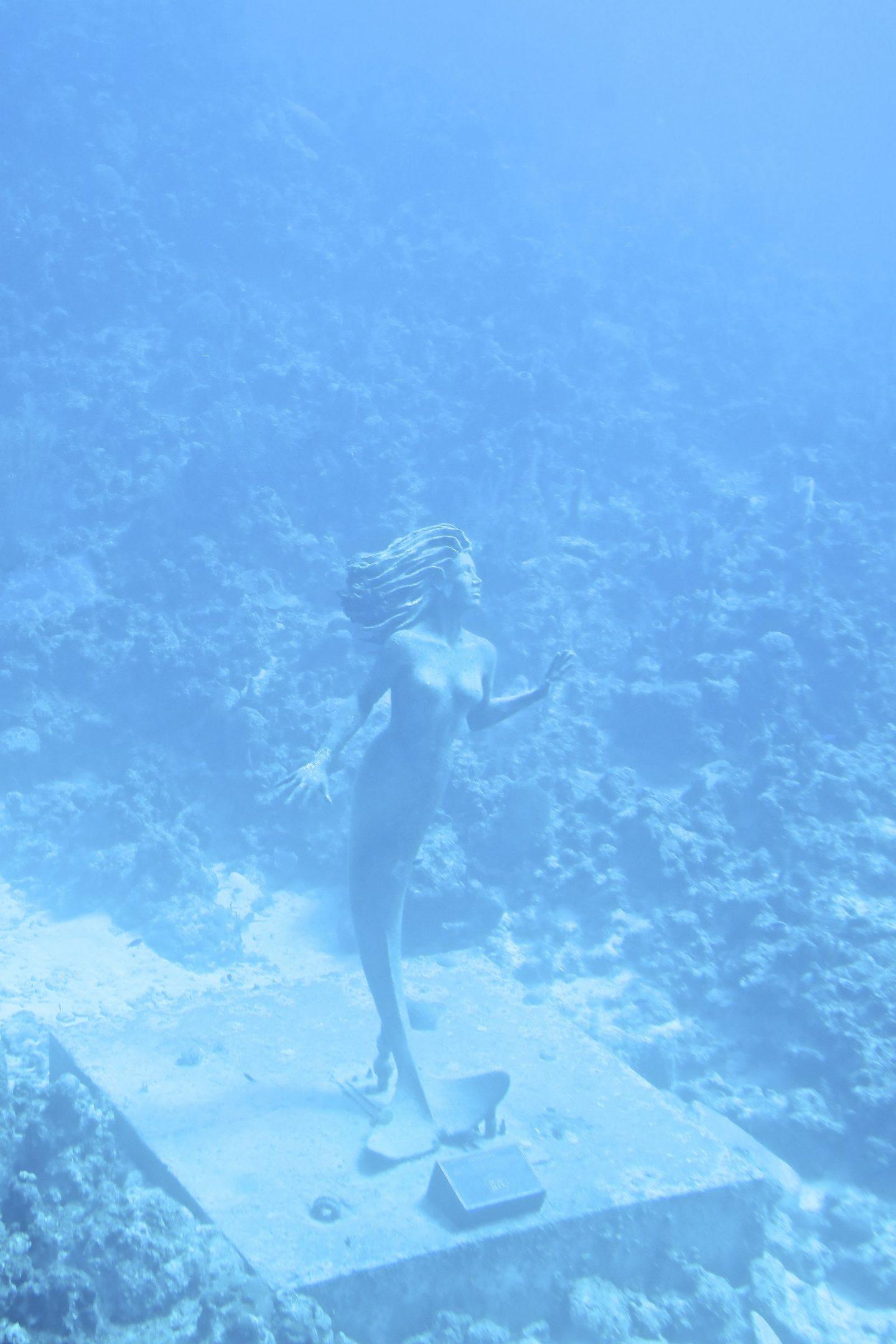 Atlantis Submarine Tours, Grand Cayman, Katie Heath, KALANCHOE