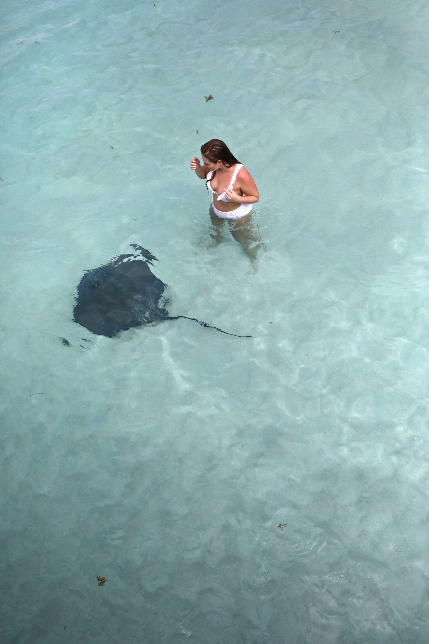Swimming With Stingrays, Stingray City, Grand Cayman, Katie Heath, KALANCHOE