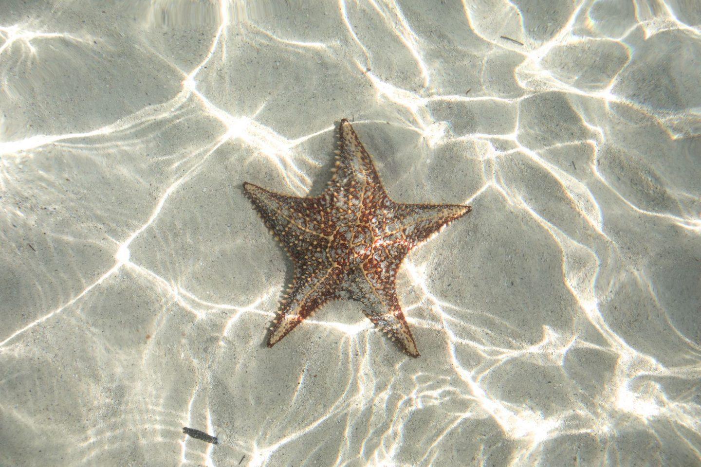 Starfish Point, Stingray City, Grand Cayman, Katie Heath, KALANCHOE
