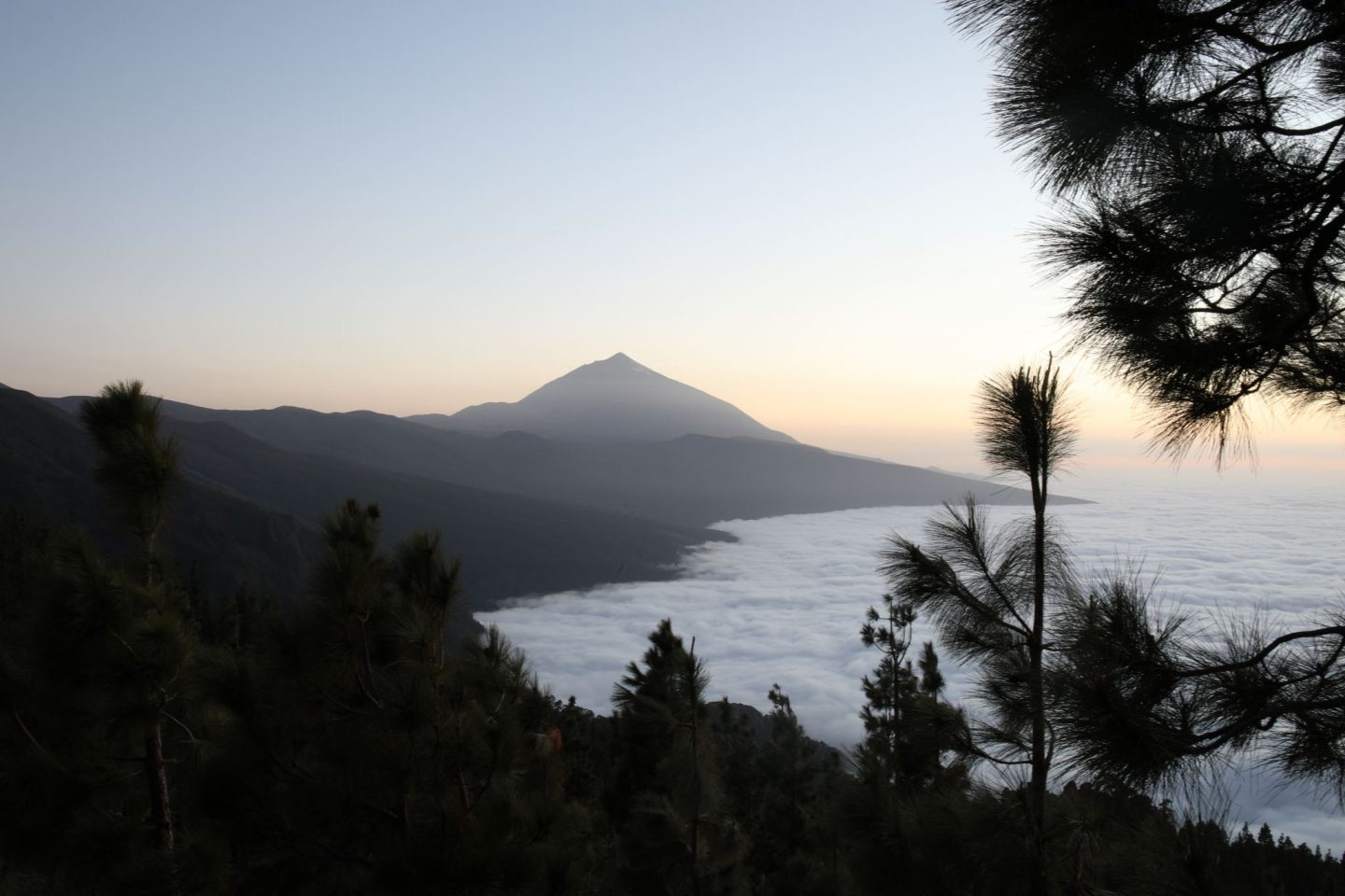 Mirador De Chipeque, Tenerife, Canary Islands, Katie Heath, KALANCHOE