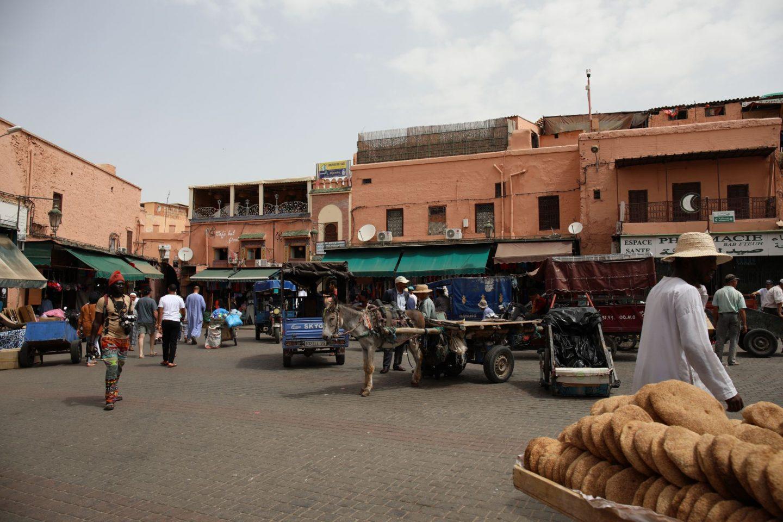 Katie KALANCHOE, Marrakech