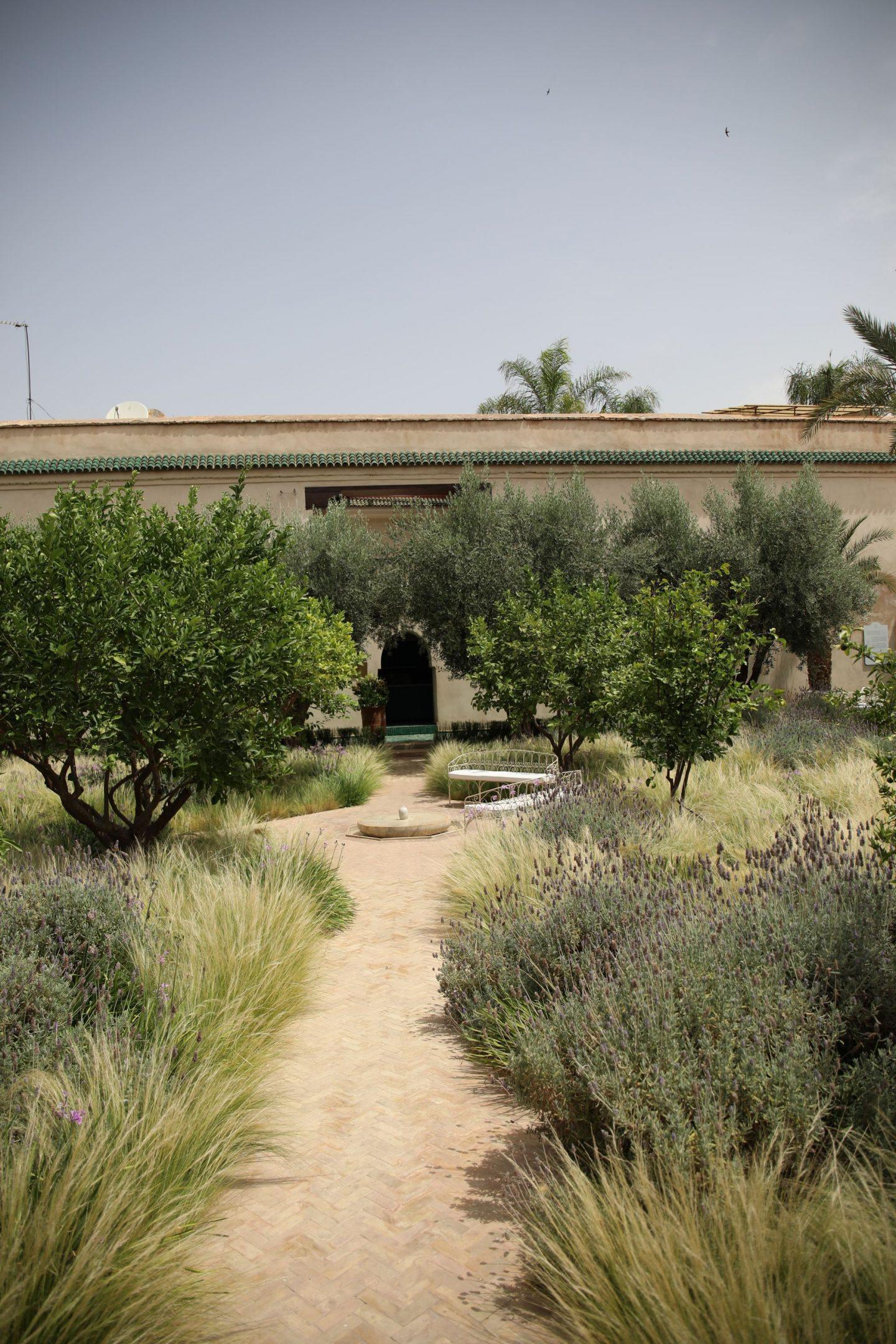 Katie KALANCHOE, Marrakech, Les Jardins De Secret