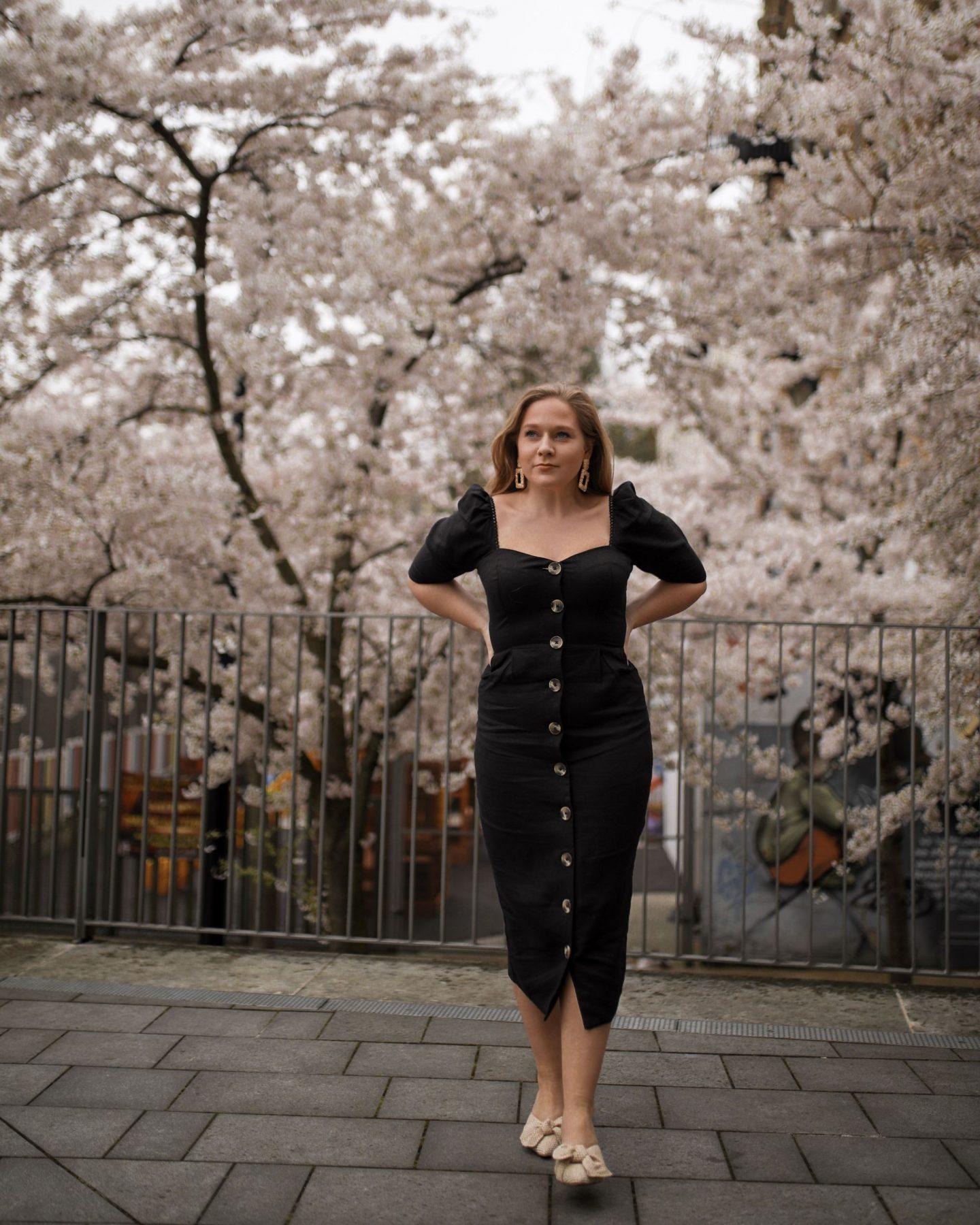 Black Cherry Blossom in spring