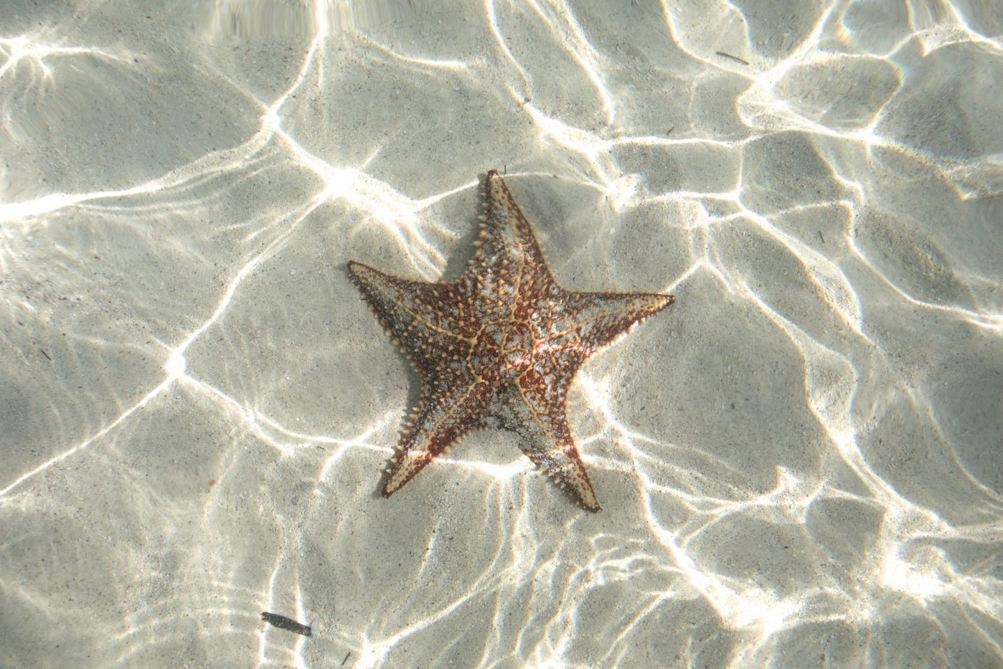 Starfish Point, Stingray City, Grand Cayman, Katie Heath, KALANCHOE