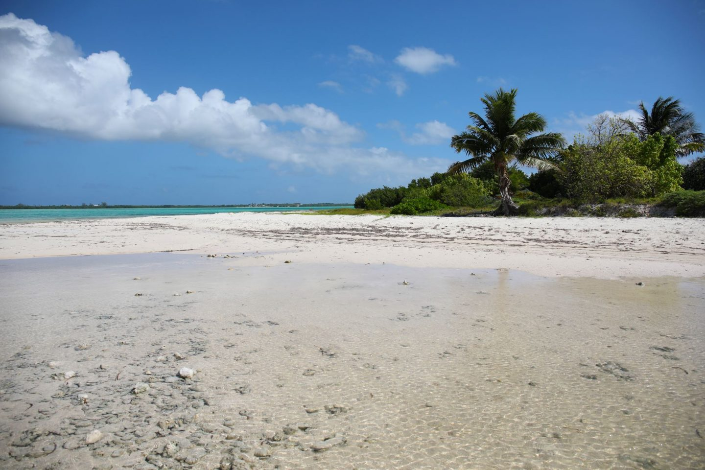 Owen Island, Little Cayman, Katie Heath, KALANCHOE