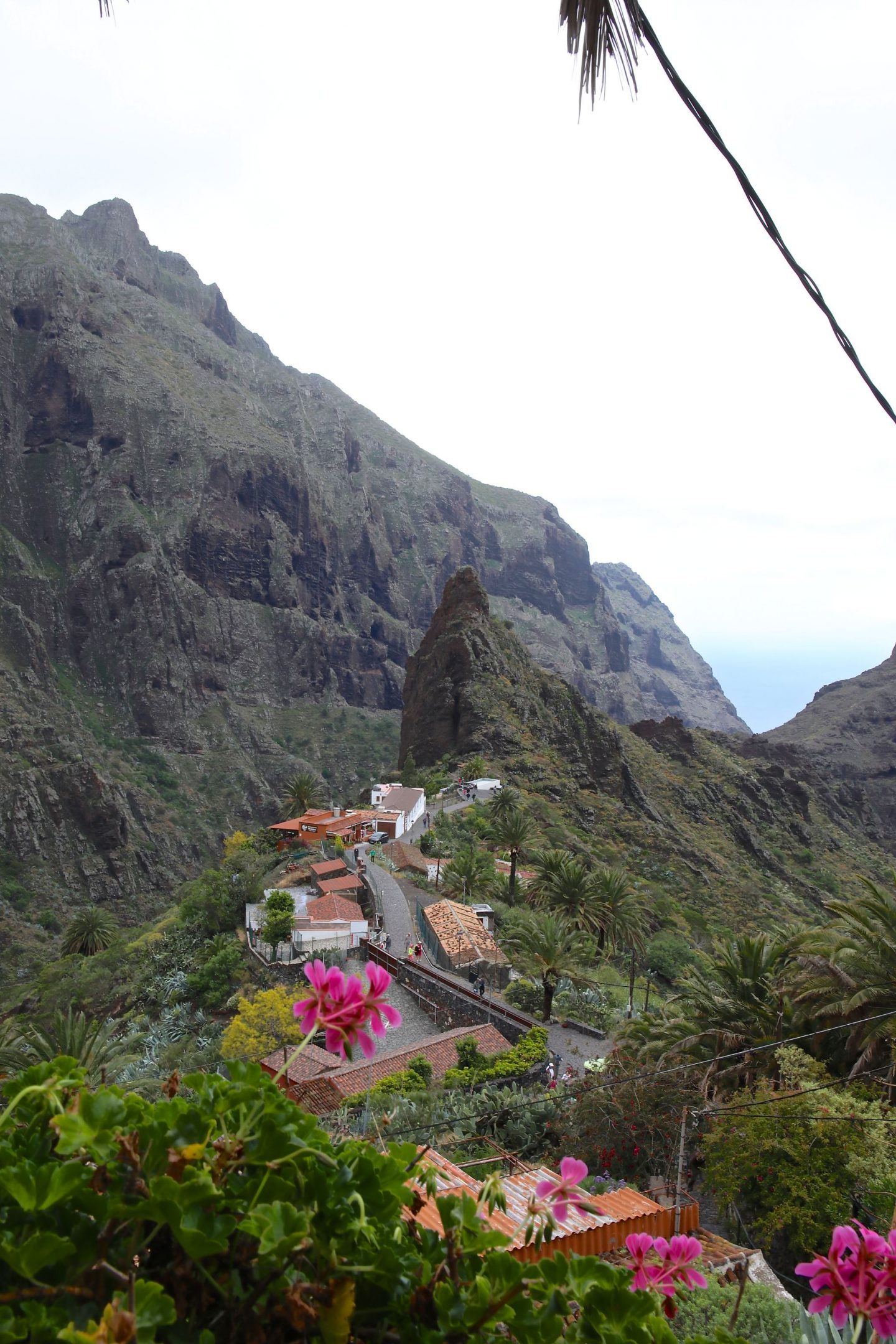 Masca, Tenerife, Canary Islands, Katie Heath, KALANCHOE