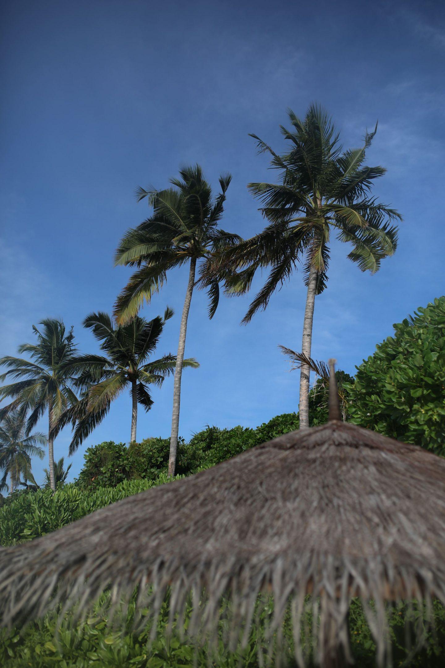The Beach, Reethi Faru Resort, Raa Atoll, The Maldives, Katie KALANCHOE, Katie Heath