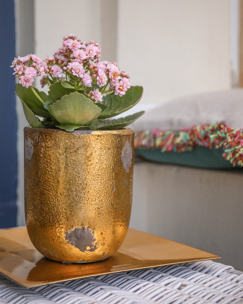 Maximise any outdoor space using Kalanchoes, Katie KALANCHOE