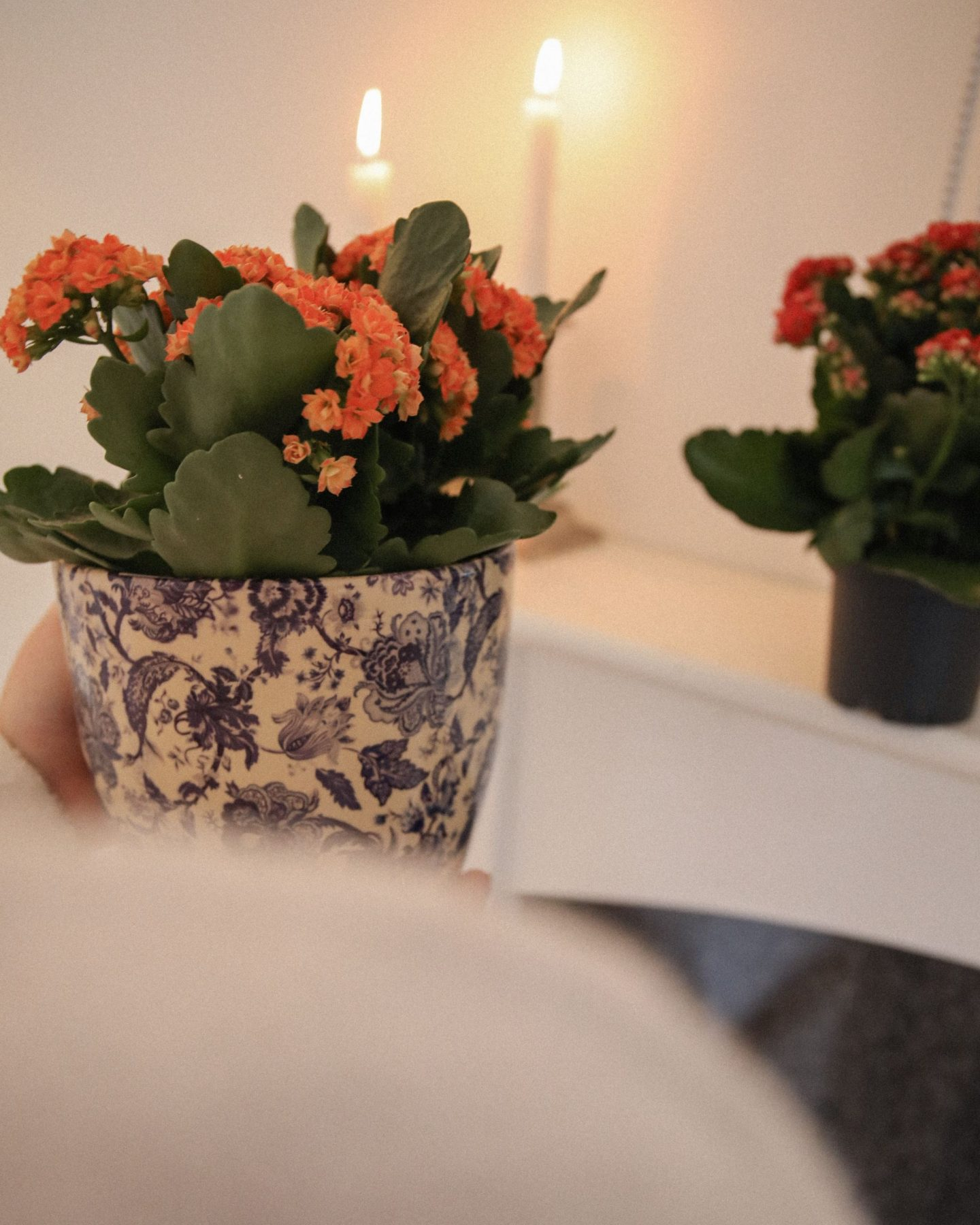 The Health Benefits of plants in the home, Katie Heath, KALANCHOE