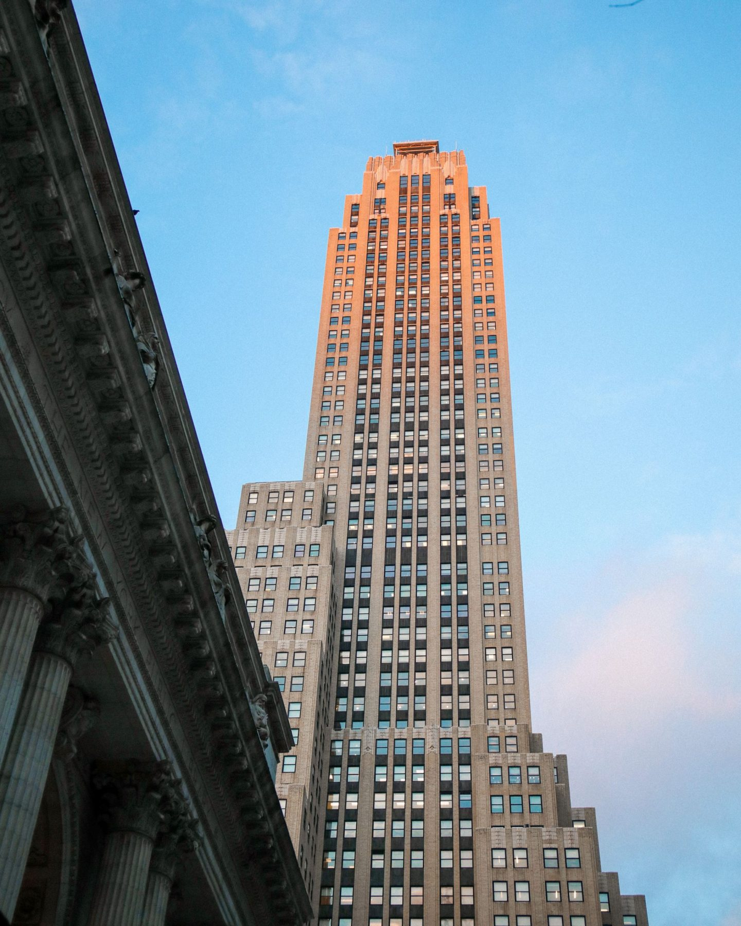 New York Public Library, NYPL, Katie Heath, KALANCHOE