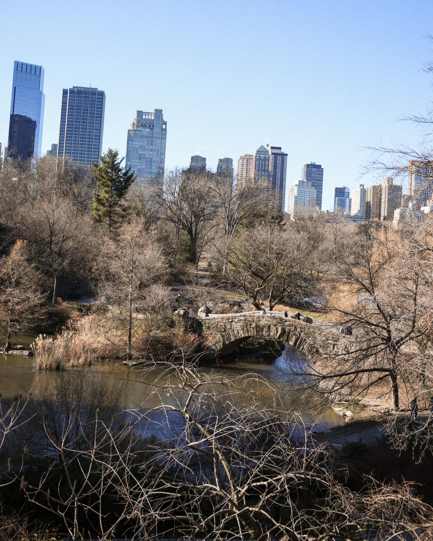 Central Park, New York, Katie Heath, KALANCHOE