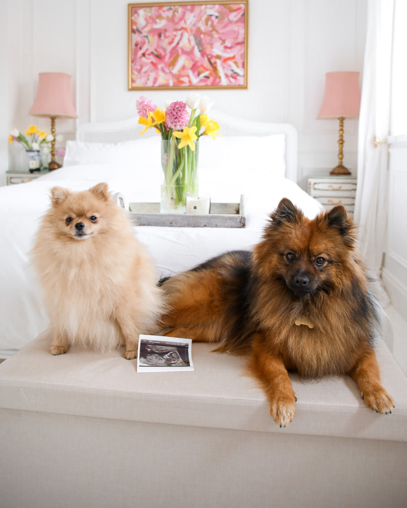 Pepi and Oscar the Pomeranians, Pregnancy Announcement, Katie KALANCHOE